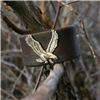 EAGLE AND WEATHERED LEATHER CUFF